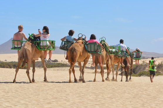 bucket list kamel teneriffa