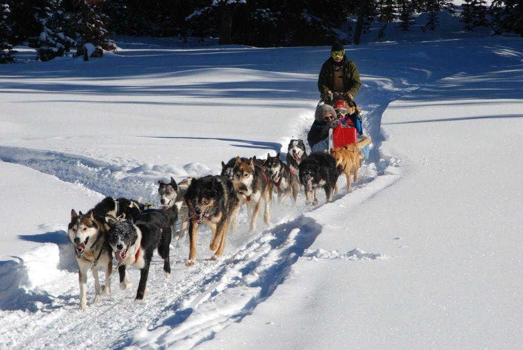 bucket list hundeschlitten