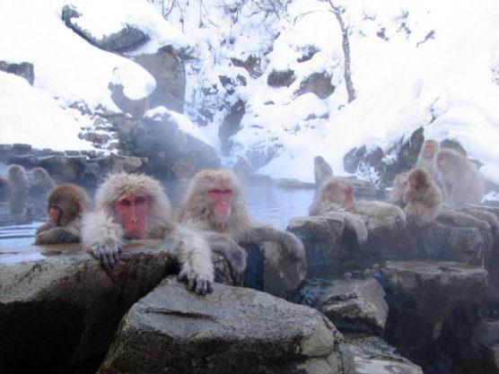 schönsten Orte der Welt jigokudani
