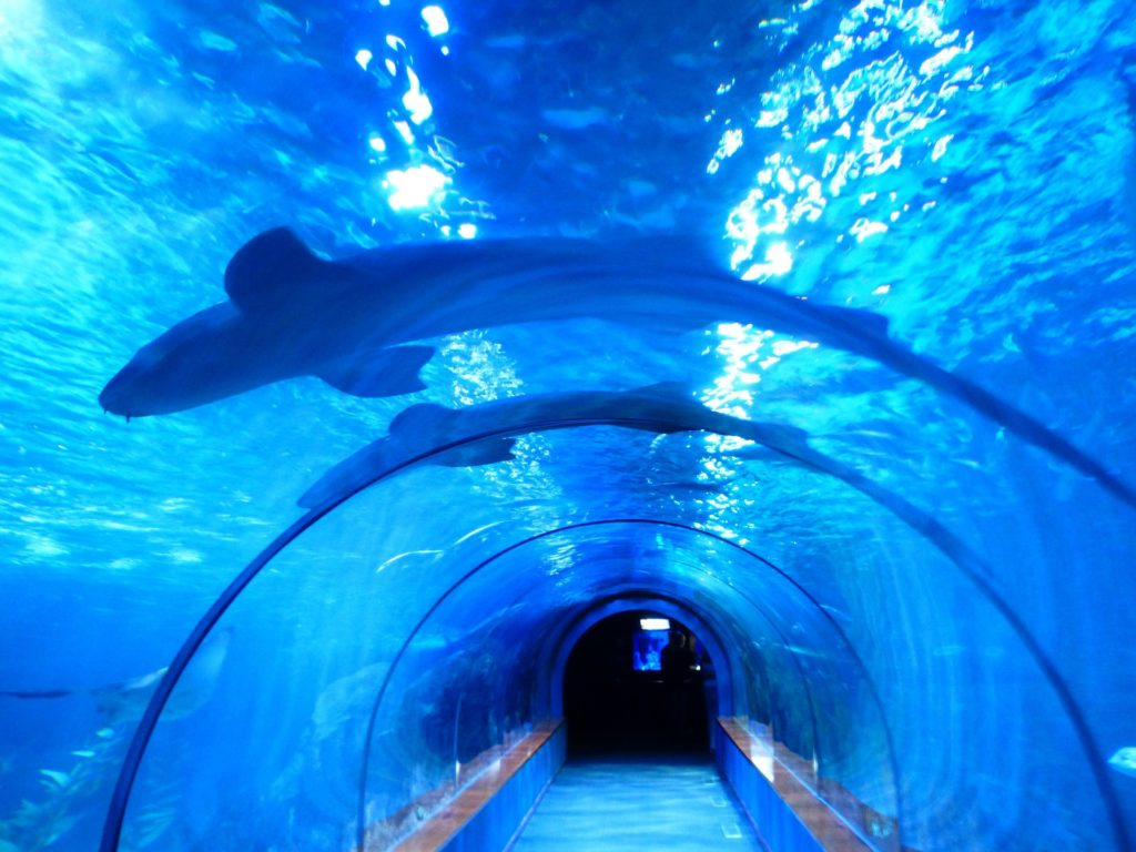 Barcelona-mit-Kindern-aquarium-barcelona